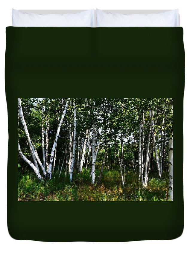 Birch Tree Duvet Cover featuring the photograph Birch Grove In The Sunlight by Michelle Calkins