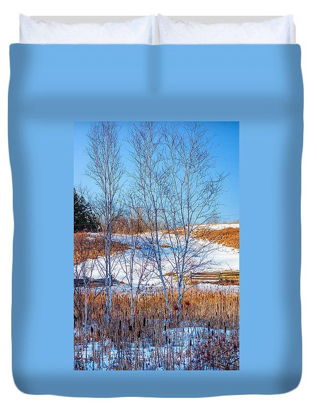 Steve Harrington Duvet Cover featuring the photograph Birches And Cattails by Steve Harrington