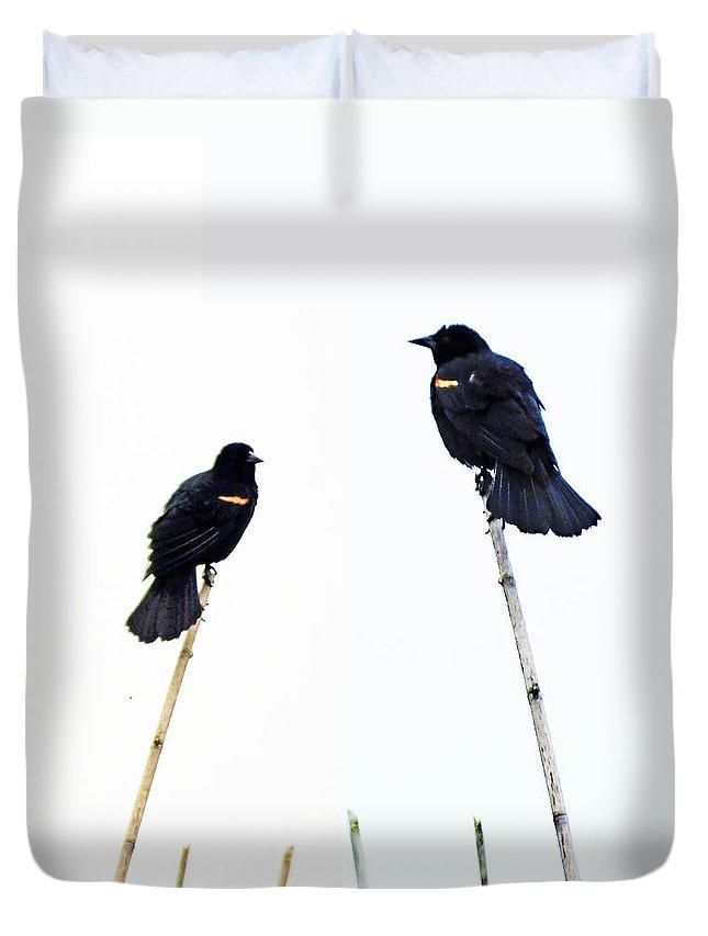 Redwing Duvet Cover featuring the digital art Bird Art by Lizi Beard-Ward