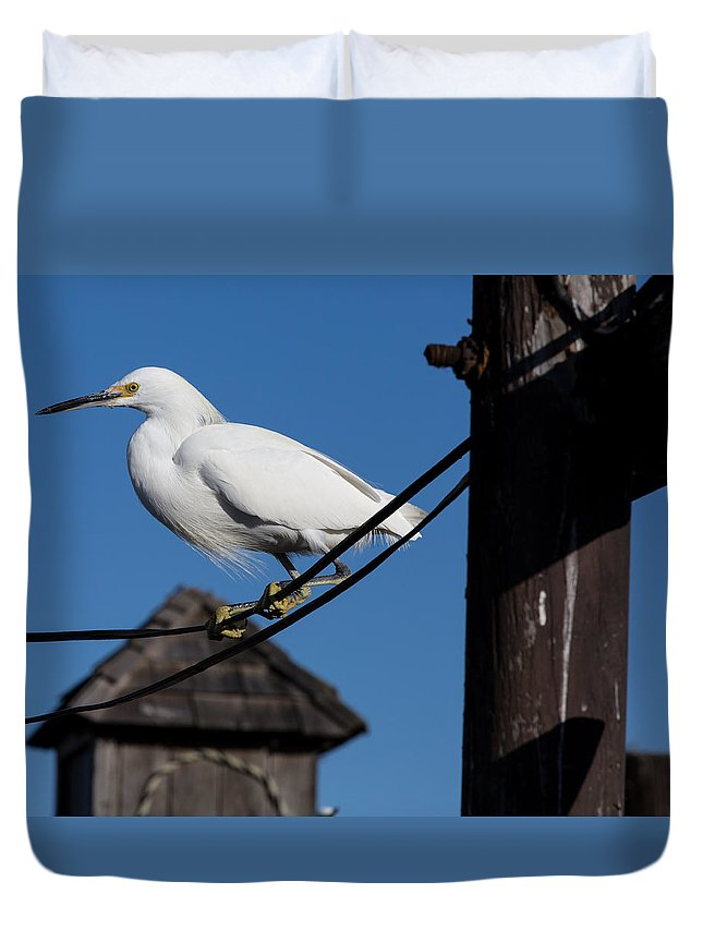 Snowy Egret Duvet Cover featuring the photograph Bird On A Wire by John Daly