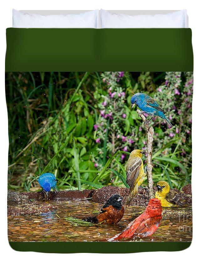 Piranga Rubra Duvet Cover featuring the photograph Birds Bathing by Anthony Mercieca