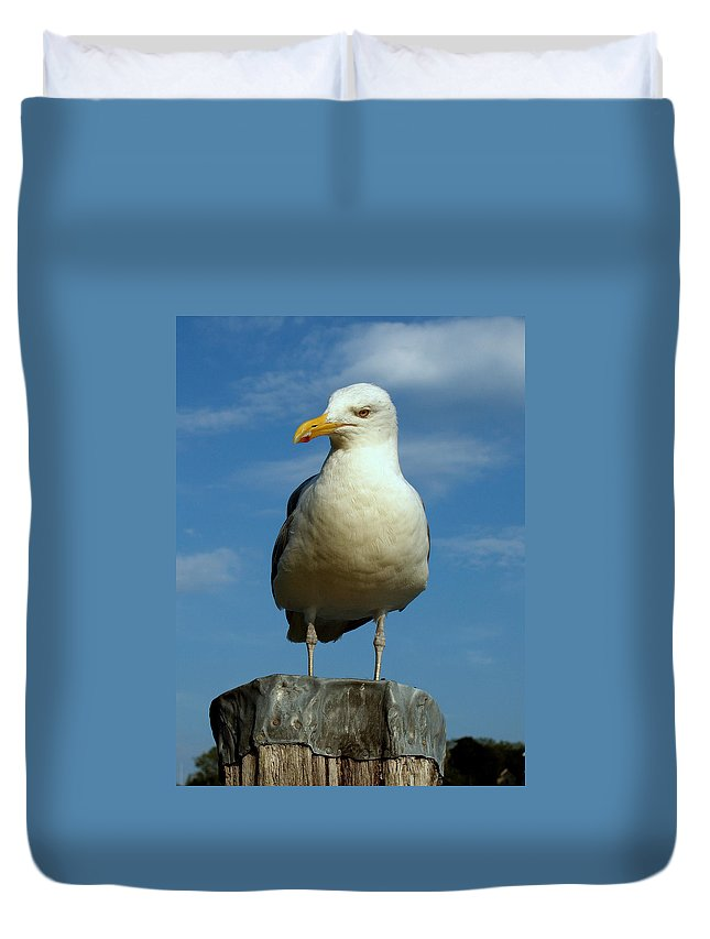 Seascape Duvet Cover featuring the photograph Bird's Eye View by Caroline Stella