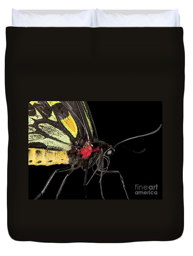 Closeup Duvet Cover featuring the photograph Birdwing Butterfly by Anthony Totah