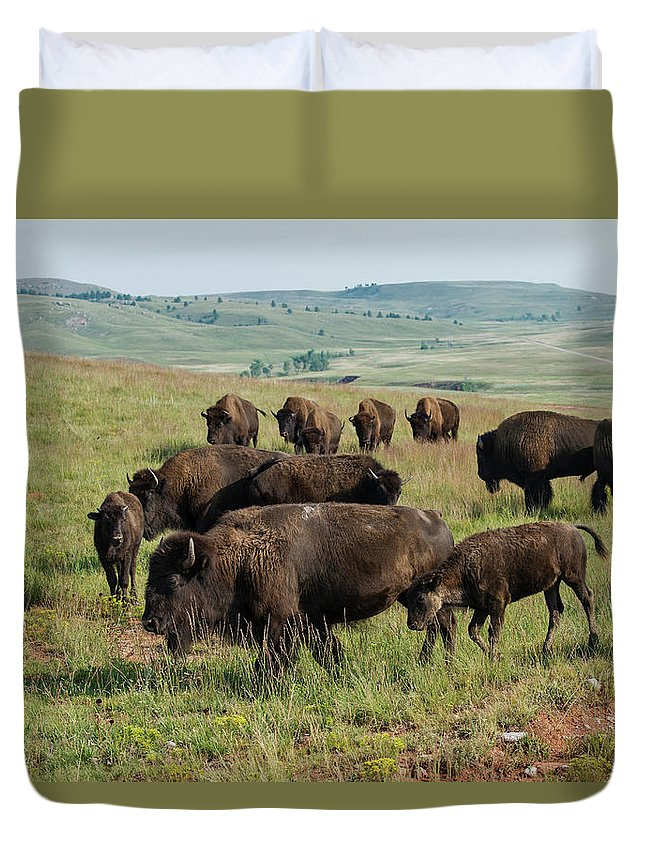 Grass Duvet Cover featuring the photograph Bison Buffalo In Wind Cave National Park by Mark Newman