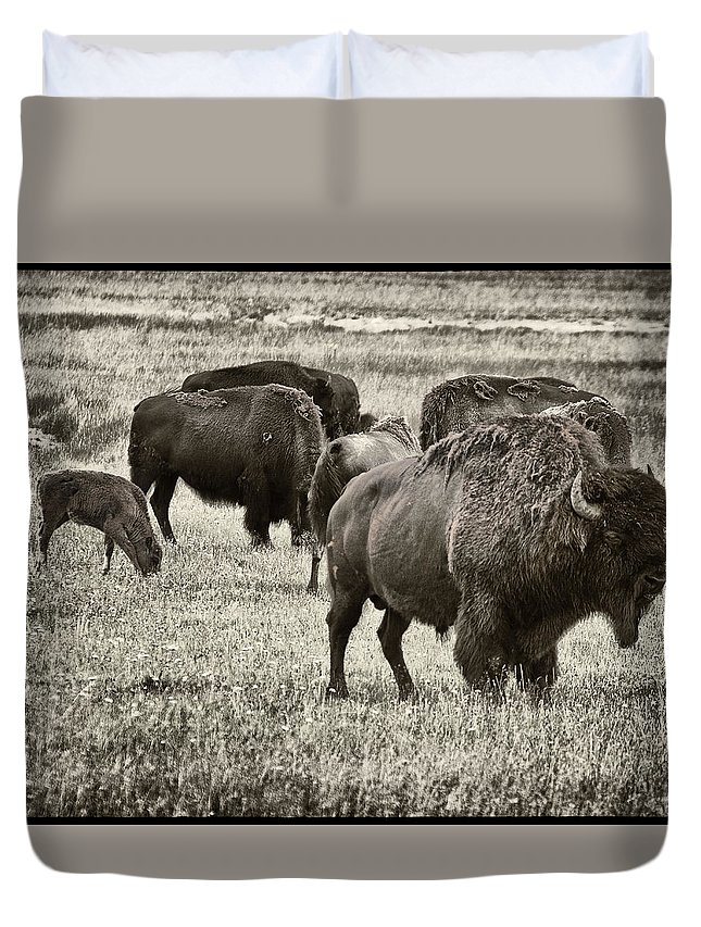 Bison Duvet Cover featuring the photograph Bison Herd Bw by Belinda Greb