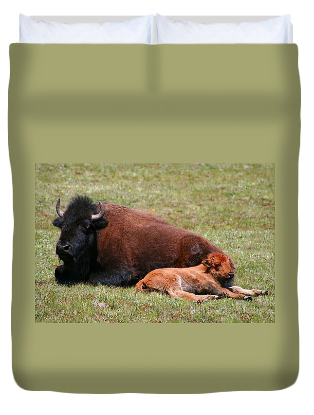 Bison Duvet Cover featuring the photograph Bison by Joanna Aud