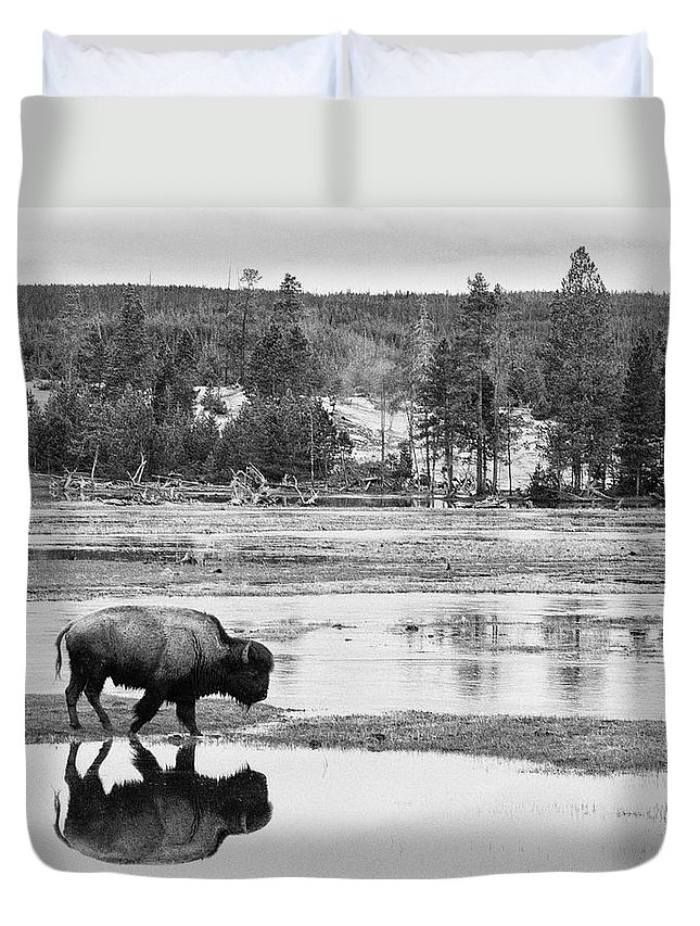 American Bison Duvet Cover featuring the photograph Bison Reflection by Max Waugh
