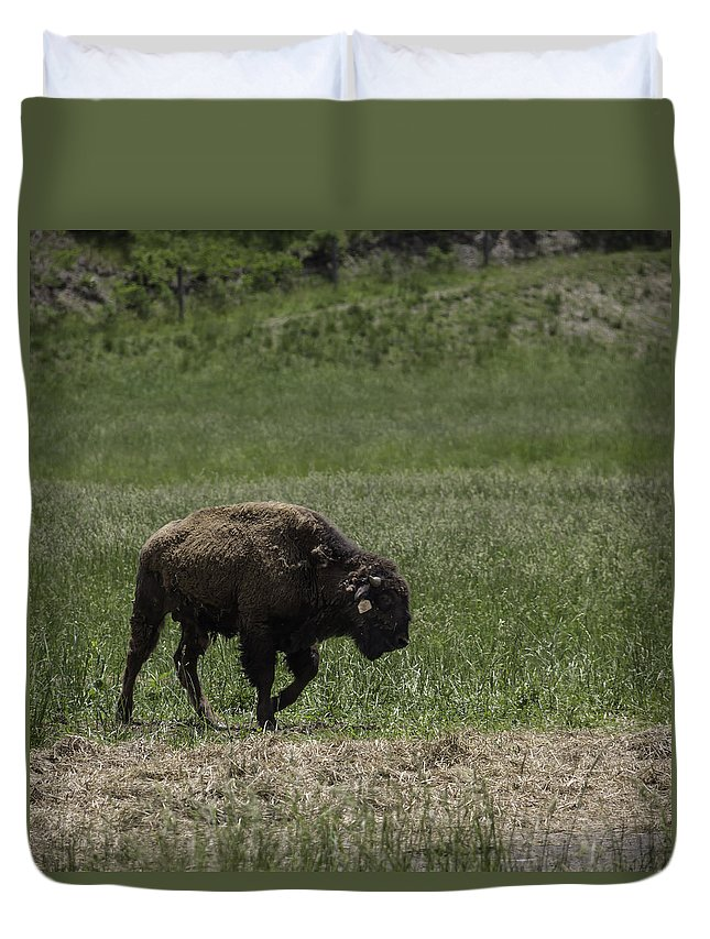 Paint Bank Duvet Cover featuring the photograph Bison Squared by Teresa Mucha