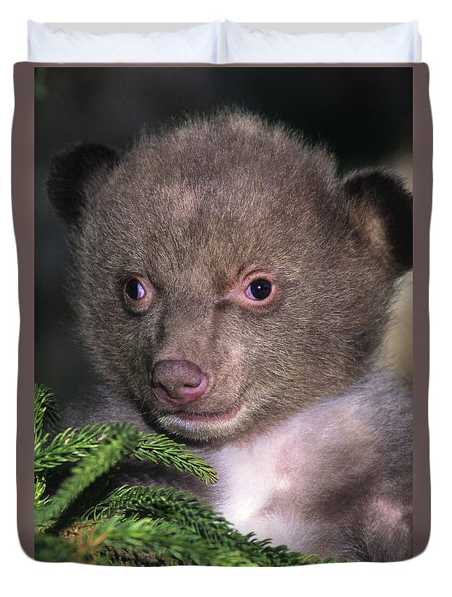 Black Bear Duvet Cover featuring the photograph Black Bear Cub Portrait Wildlife Rescue by Dave Welling