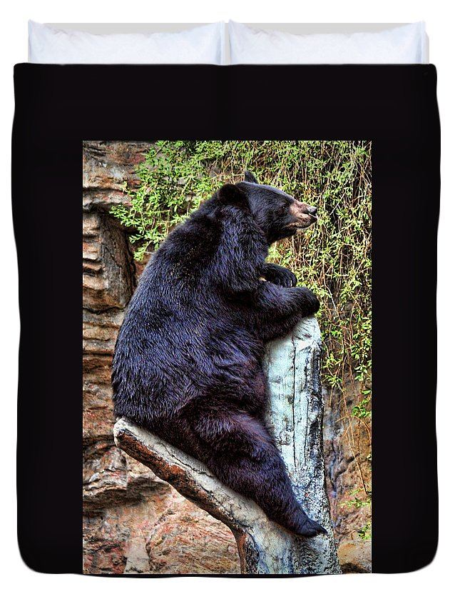 Bear Duvet Cover featuring the photograph Black Bear by David Sanchez