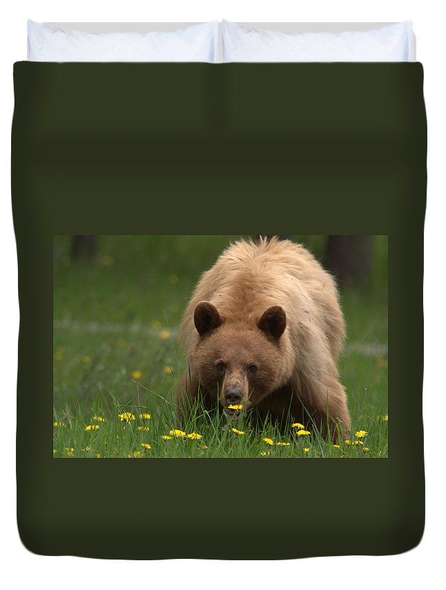 Bear Duvet Cover featuring the photograph Black Bear by Frank Madia