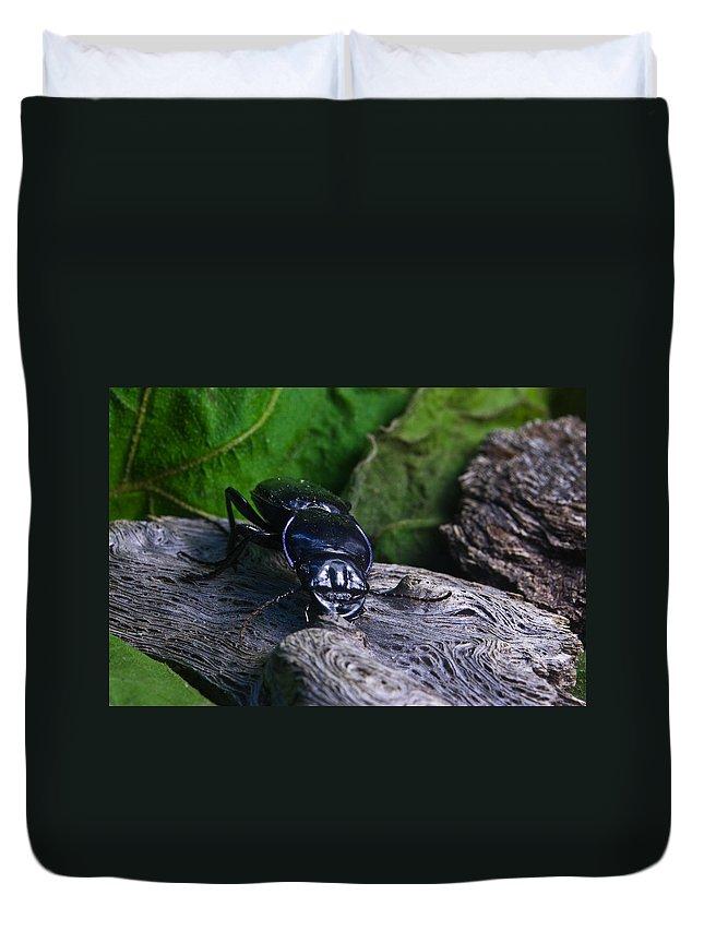 Beetle Duvet Cover featuring the photograph Black Beetle by Douglas Barnett
