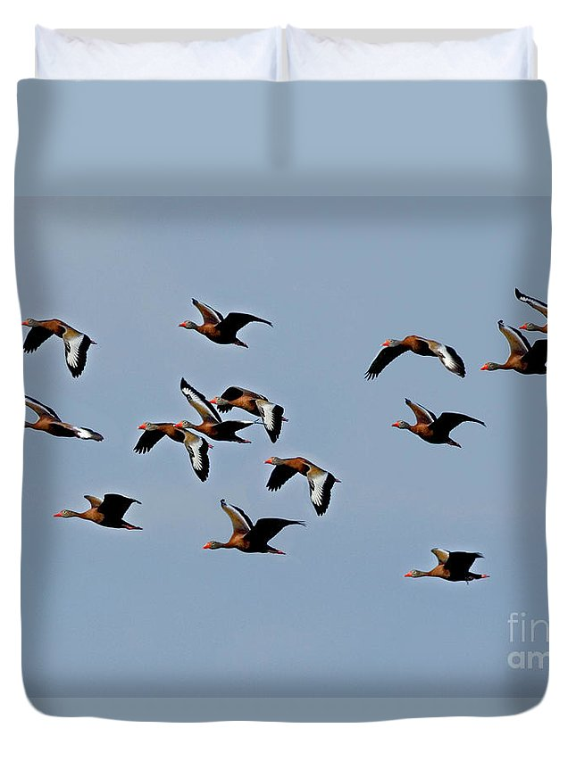 Animal Duvet Cover featuring the photograph Black-bellied Whistling Ducks In Flight by Anthony Mercieca