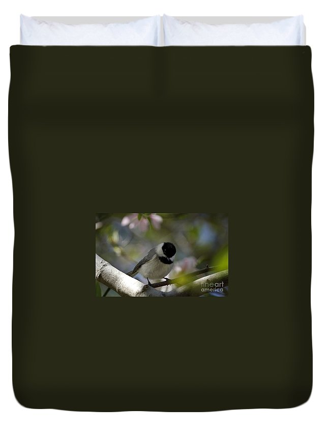 Chickadee Duvet Cover featuring the photograph Black Capped Beadhead by Beth Phifer