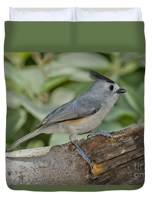 Black-crested Titmouse Duvet Cover featuring the photograph Black-crested Titmouse by Anthony Mercieca