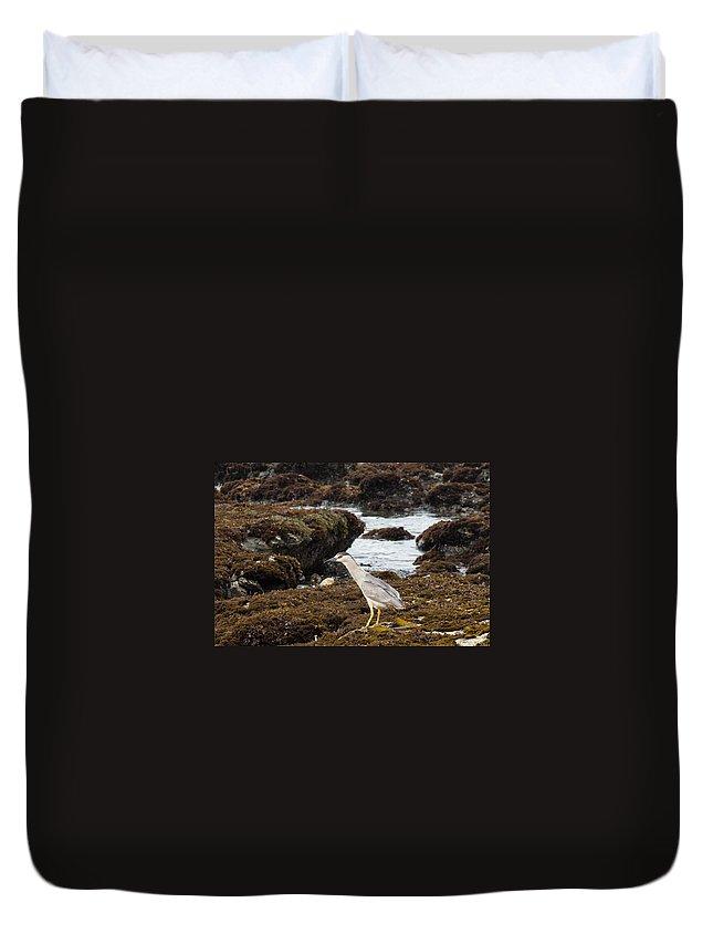 Black-crowned Night Heron Duvet Cover featuring the photograph Black-crowned Night Heron by John Daly