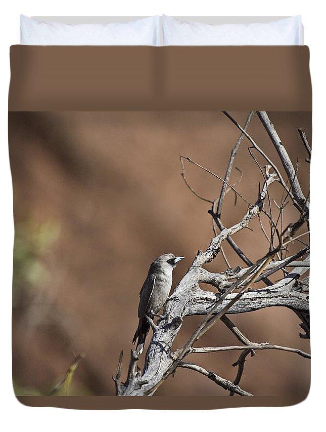 Black-faced Cuckoo Shrike Duvet Cover featuring the photograph Black-faced Cuckoo Shrike by Douglas Barnard