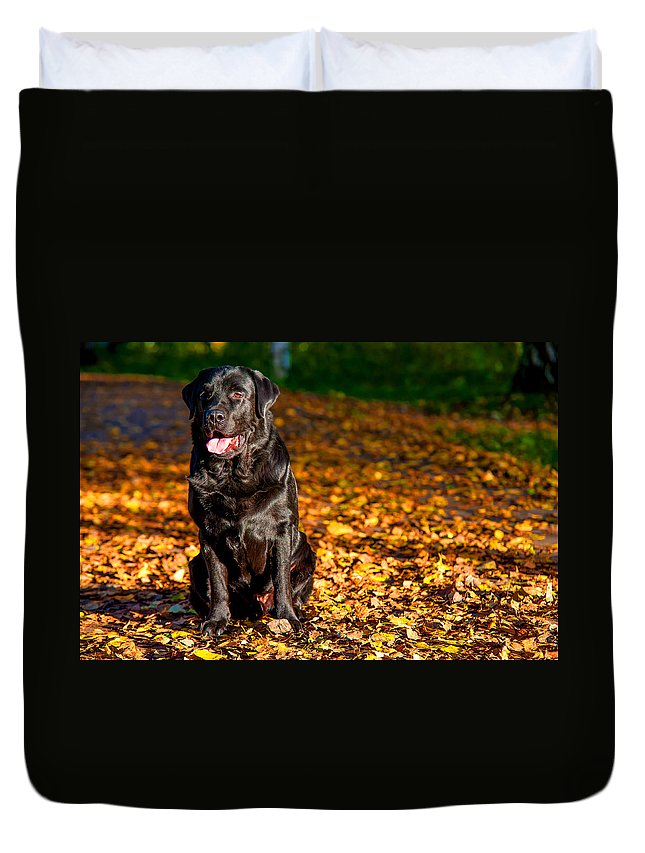 Dog Duvet Cover featuring the photograph Black Labrador Retriever In Autumn Forest by Jenny Rainbow