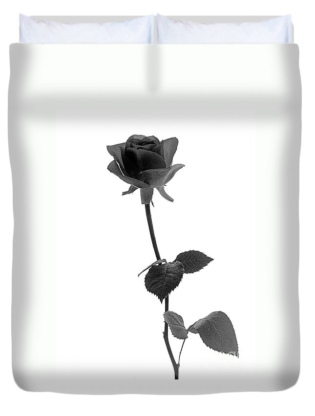 Rose Duvet Cover featuring the photograph Black Rose by Casper Cammeraat