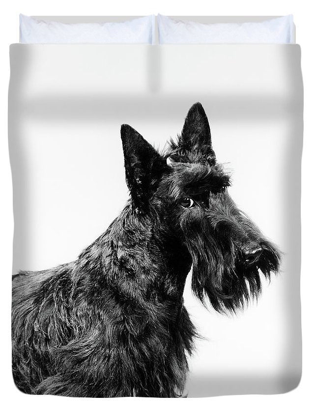 Photography Duvet Cover featuring the photograph Black Scottie Scottish Terrier Dog by Vintage Images