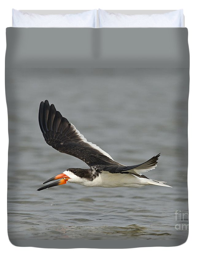 Black Skimmer Duvet Cover featuring the photograph Black Skimmer Eating Fish by Anthony Mercieca