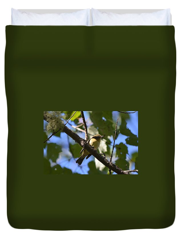 Nature Duvet Cover featuring the photograph Black-throated Blue Warbler by James Petersen