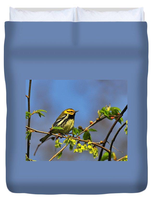 Black-throated Green Warbler Duvet Cover featuring the photograph Black-throated Green Warbler by Tony Beck