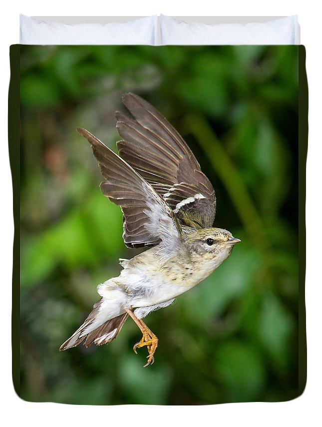 Animal Duvet Cover featuring the photograph Blackpoll Warbler by Anthony Mercieca