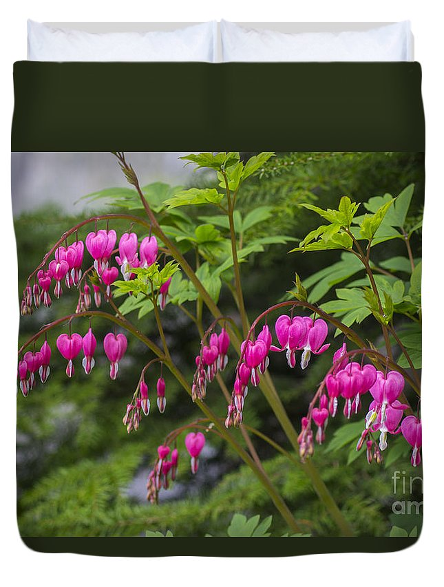 Bleeding Duvet Cover featuring the photograph Bleeding Hearts by Louise Magno