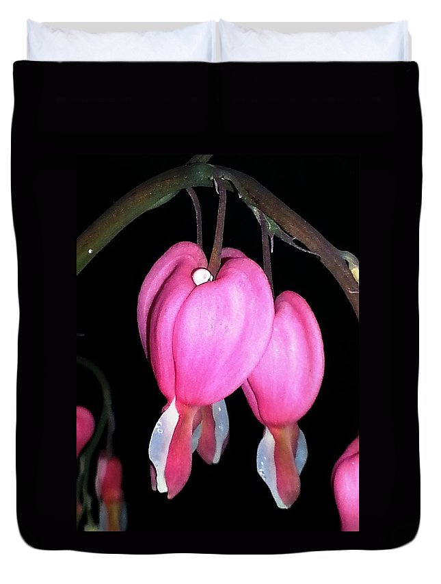 Bleeding Heart Duvet Cover featuring the photograph Bleeding In The Dark by Christine Hirtle