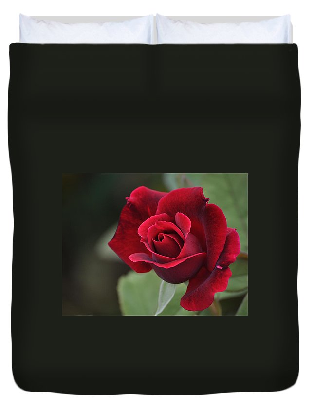 Red Rose Duvet Cover featuring the photograph Blood Rose by Paula Contreras