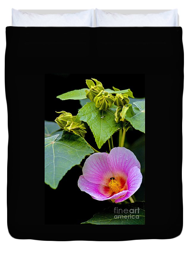 Arenal Volcano Region Costa Rica Rose Mallow Bloom Blooms Bud Buds Pink Flower Flowers Blossom Blossoms Leaf Leaves Plant Plants Bug Bugs Raindrop Raindrops Petal Petals Still Life Nature Duvet Cover featuring the photograph Bloom And Buds by Bob Phillips