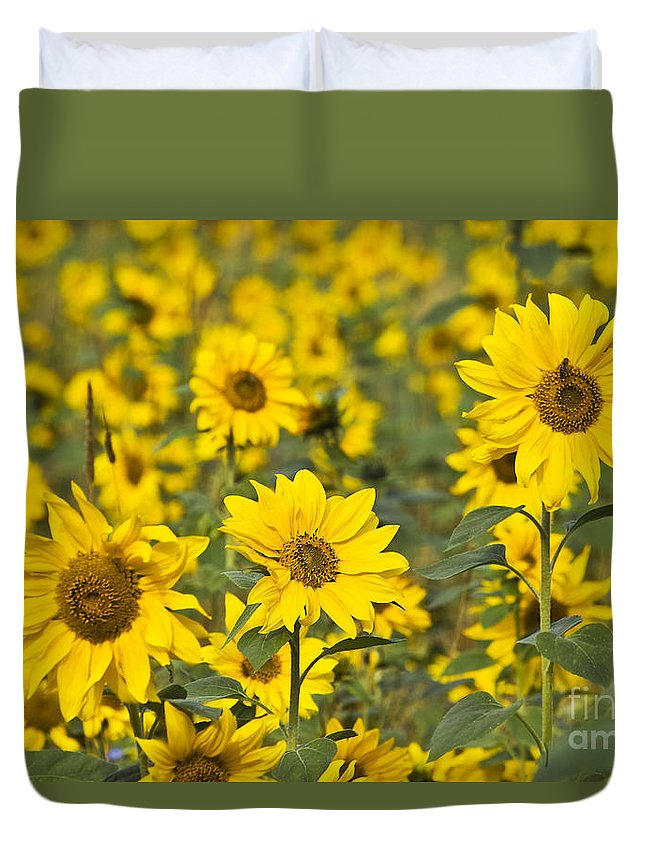 Nature Duvet Cover featuring the photograph Blooming Sunflower by Heiko Koehrer-Wagner