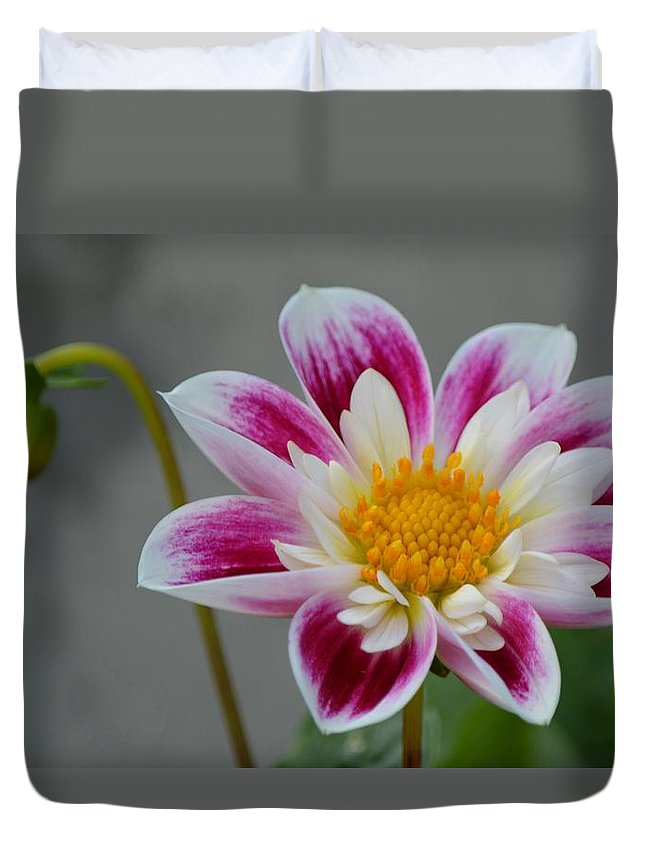 Pink Duvet Cover featuring the photograph Blossoms Abound by Patricia Twardzik