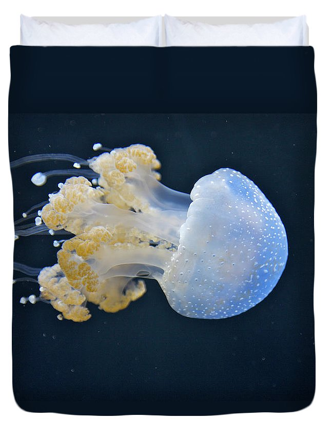 Underwater Duvet Cover featuring the photograph Blue And White Underwater Living Sea by Barry Winiker
