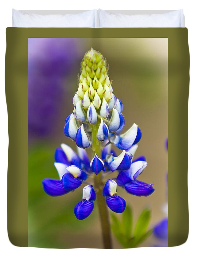 Plant Duvet Cover featuring the photograph Blue Bonnets Lupinus by Maj Seda
