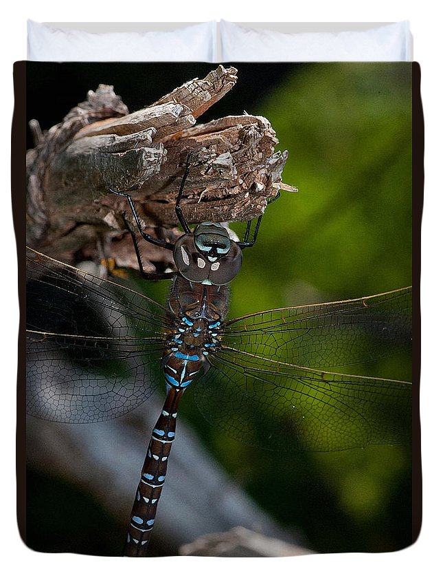 Dragonfly Duvet Cover featuring the photograph Blue Dragon 14 by WB Johnston