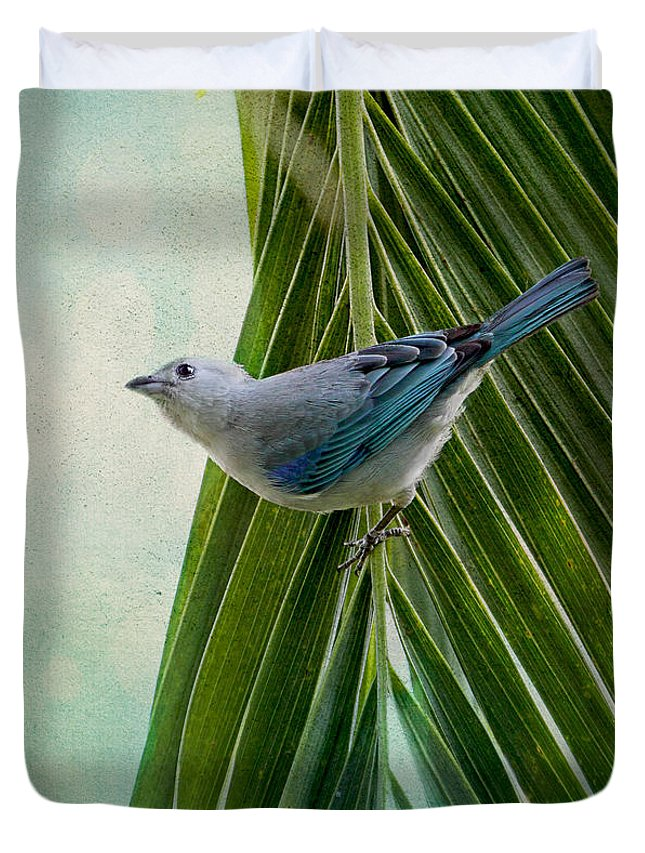 Tanager Duvet Cover featuring the photograph Blue Grey Tanager On A Palm Tree by Peggy Collins