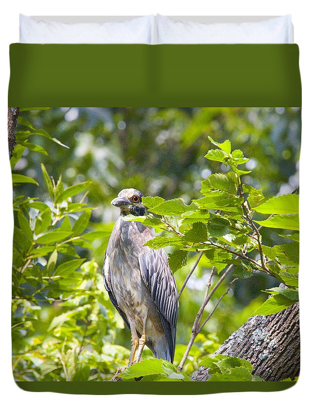 Great Blue Heron Photographs Duvet Cover featuring the photograph Blue Heron Peeking by Vernis Maxwell