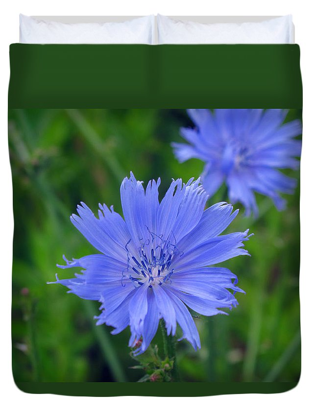 Cornflower Duvet Cover featuring the photograph Blue Hue Hue by Barbara McDevitt