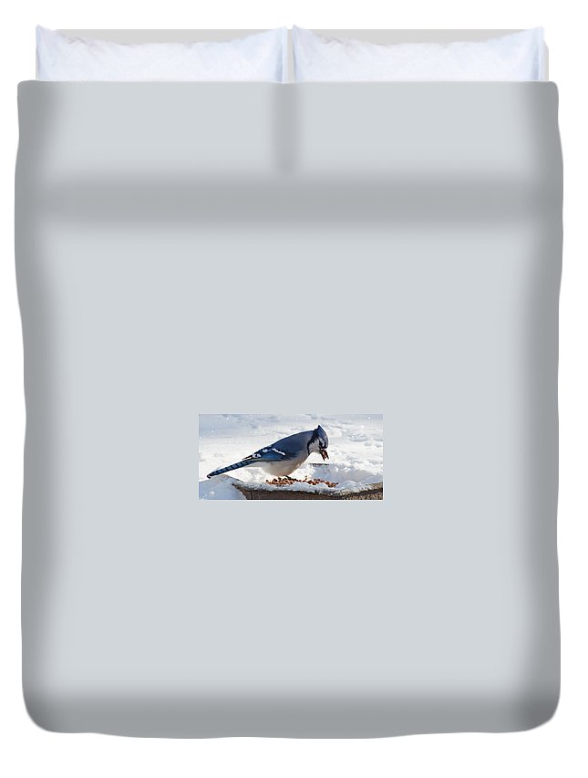 Jay Duvet Cover featuring the photograph Blue Jay Chow-down by Jeff Galbraith