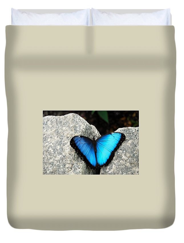 Blue Morpho Butterfly Duvet Cover for Sale by Eva Kaufman