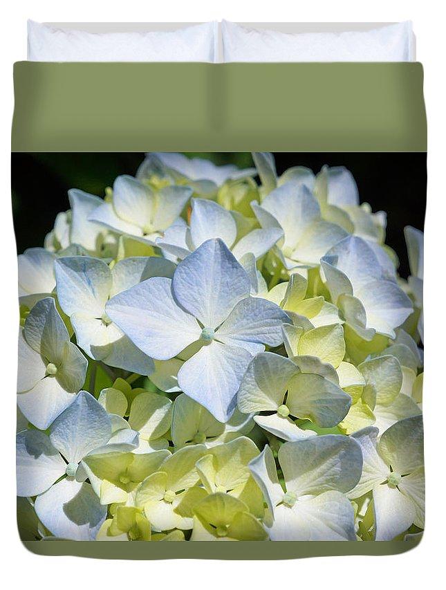 Blue Duvet Cover featuring the photograph Blue Pastel Floral Art Prints Hydrangea Flowers by Baslee Troutman