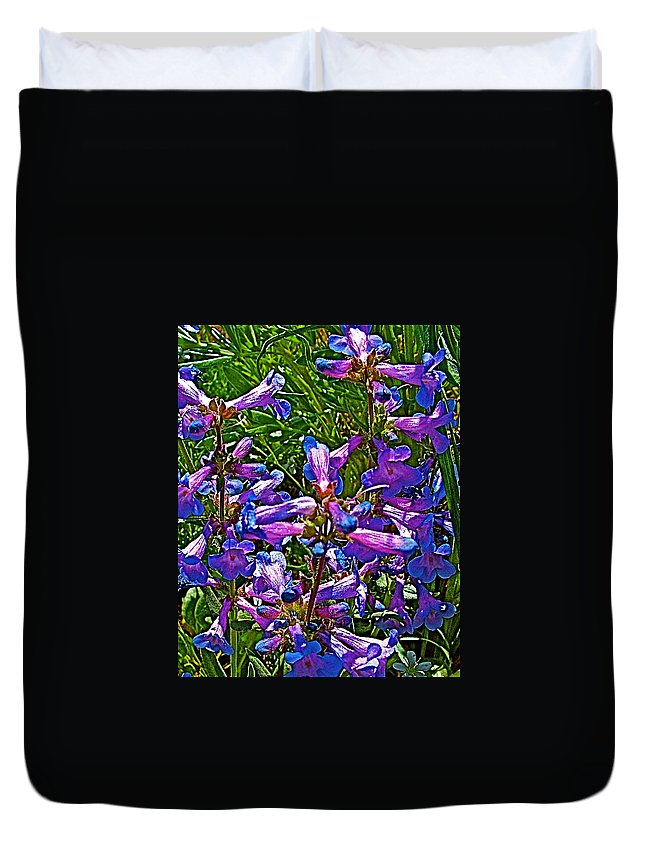 Blue Penstemon On Bald Mountain In Ketchum Duvet Cover featuring the photograph Blue Penstemon On Bald Mountain In Ketchum-idaho by Ruth Hager
