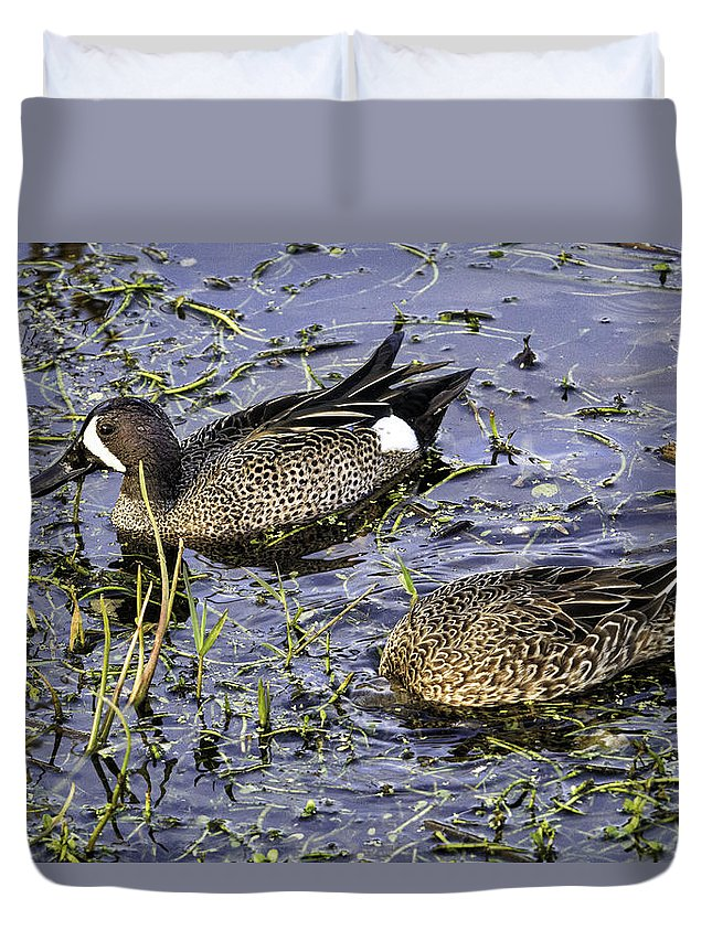 Birds Duvet Cover featuring the photograph Blue Teal by Fran Gallogly