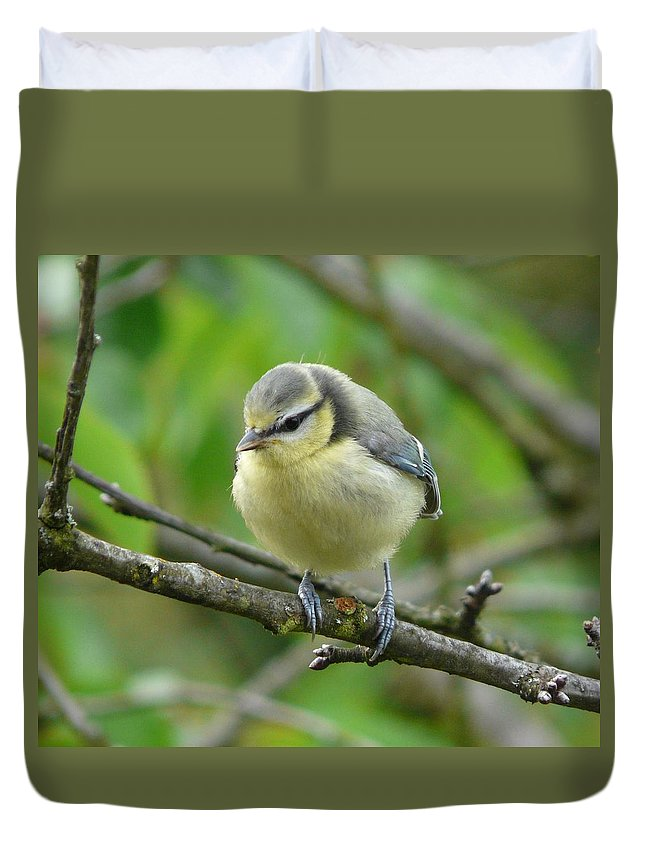 Bird Duvet Cover featuring the photograph Blue Tit In A Cherry Tree by Valerie Ornstein