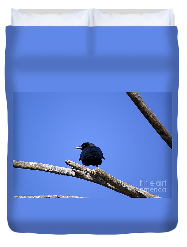 Crow Duvet Cover featuring the photograph Blue View by Joe Geraci