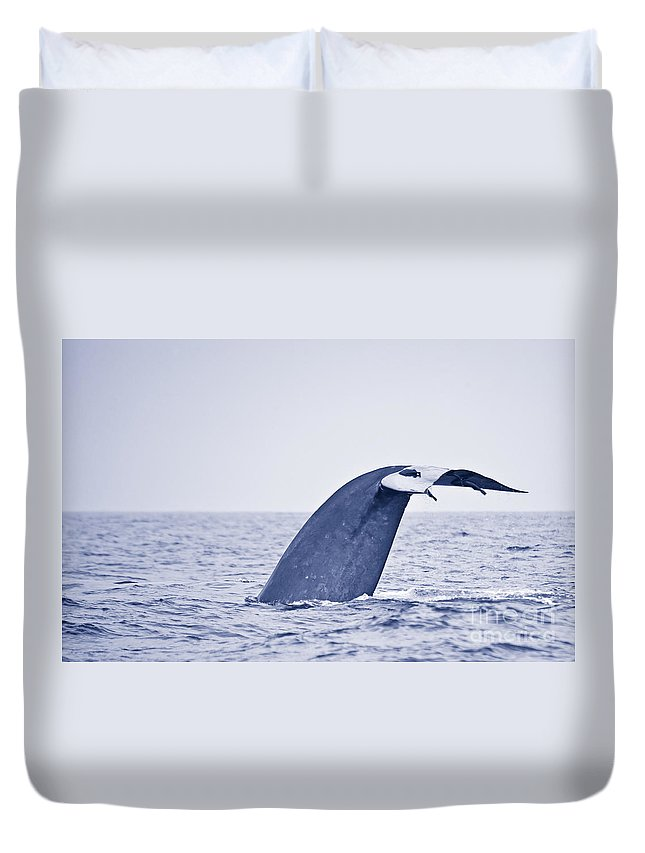 Pygmy Blue Whale Duvet Cover featuring the photograph Blue Whale Tail Fluke With Remoras by Liz Leyden