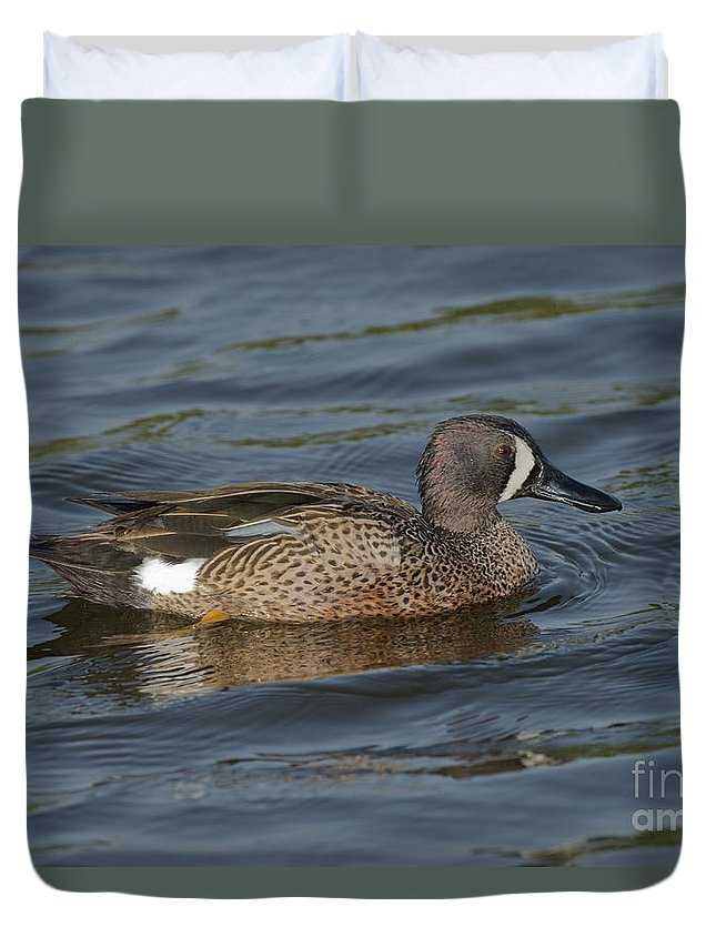 Blue-winged Teal Duvet Cover featuring the photograph Blue-winged Teal by Anthony Mercieca