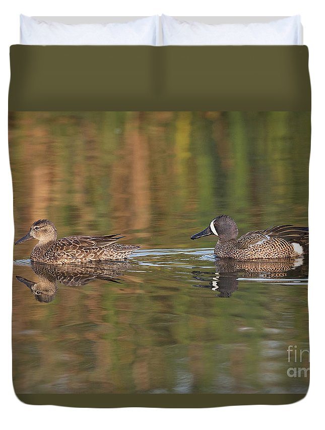 Blue-winged Teal Duvet Cover featuring the photograph Blue-winged Teal Pair by Anthony Mercieca